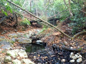 Los Trancos Creek, Portola Valley