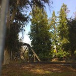 "Here is the trestle viewed from El Camino Real. The tall tree in the middle is ""El Palo Alto""."